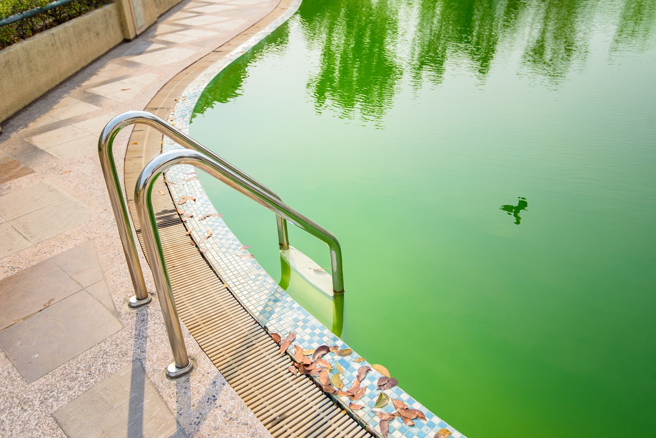 Green-Water-in-Your-Swimming-Pool