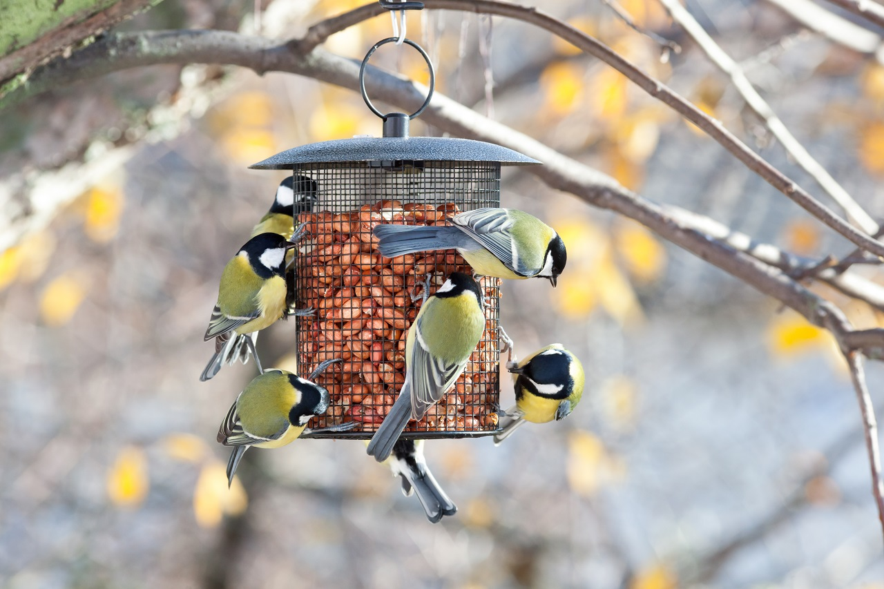 Best-Bird-Feeders-in-All-Shapes-and-Sizes