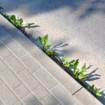 Growing-weeds-on-the-side-of-the-road-by-the-sidewalk