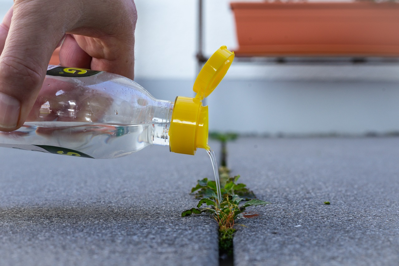 Man-pouring-vinegar-essence-over-weed-growing-between-concrete-floor-tiles-as-a-means-of-a-biological-weed-killer