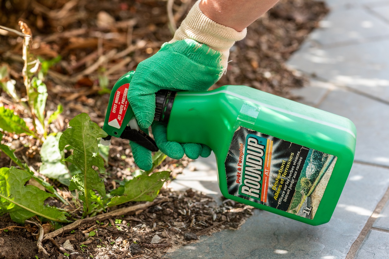 Paris-France-August-15-2018-Gardener-using-Roundup-herbicide-in-a-french-garden.-Roundup-is-a-brand-name-of-an-herbicide-containing-glyphosate-made-by-Monsanto-Company