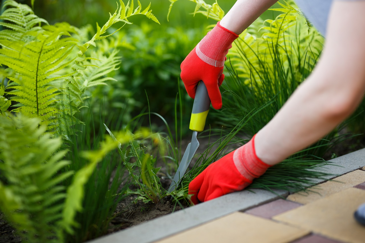 Photo-of-gloved-woman-hand-holding-weed-and-tool-removing-it-from-soil