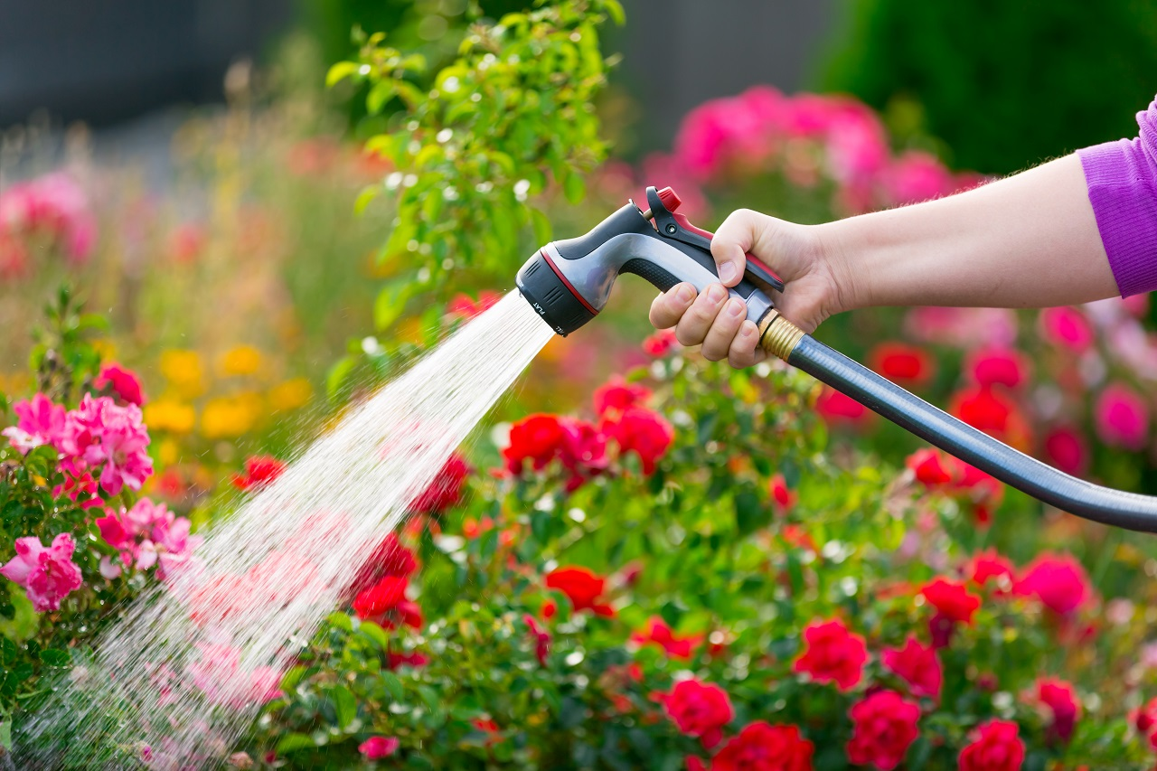 Watering-garden-flowers-with-hose