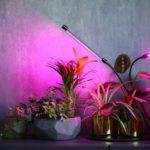 phytolamps-illuminate-potted-plants-on-a-shelf-in-a-room